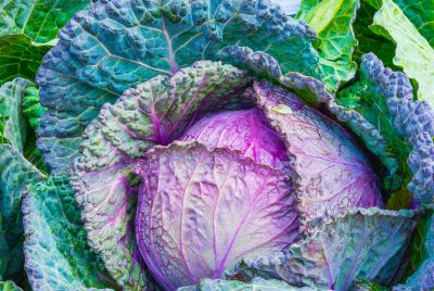 Cabbage And Diabetes Explained In One Post